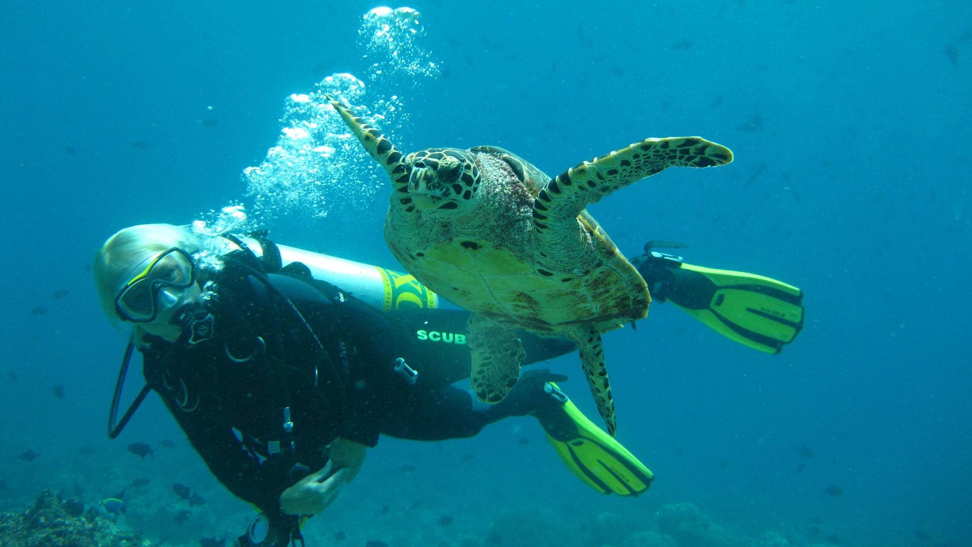 Diving at COMO